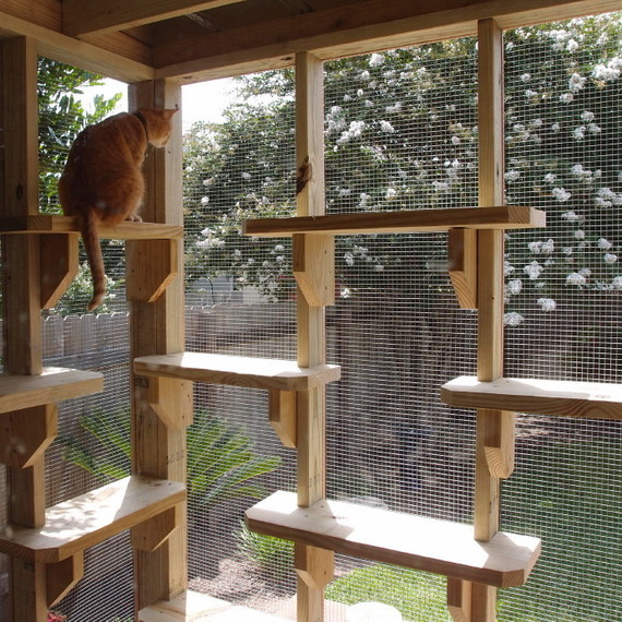 catio or a patio for your cat